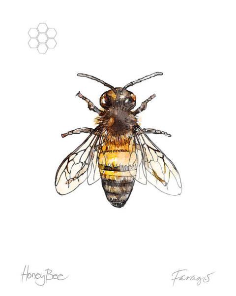 Bug Drawing - Honeybee by Peter Farago