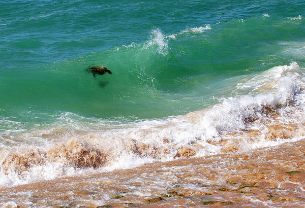 Photograph - Honu Surfing 2 by Anthony Jones