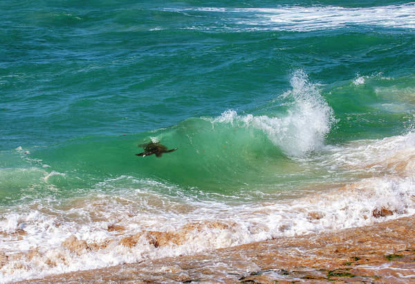 Photograph - Honu Surfing by Anthony Jones