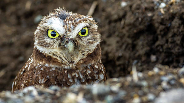 Photograph - Hoo Are You? by Jack Peterson