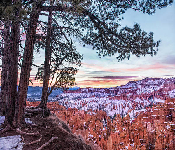 Photograph - Hoodoos In Winter, Bryce Canyon by Tim Fitzharris