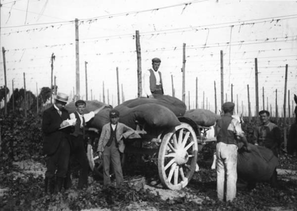 Farm Photograph - Hop Picking by Hulton Archive