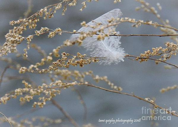 Wall Art - Photograph - Hope Is The Thing With Feathers by Tami Quigley