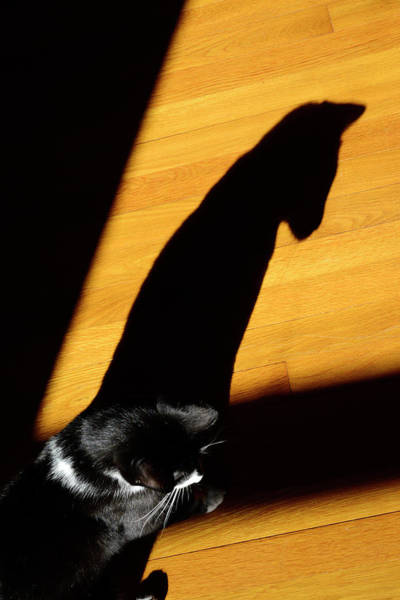 Photograph - Hopi And His Shadow by Paul W Faust - Impressions of Light