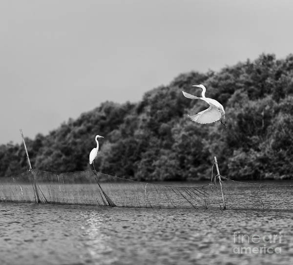 Wall Art - Photograph - Horizontal Vivid Black And White Stork by Spacedrone808