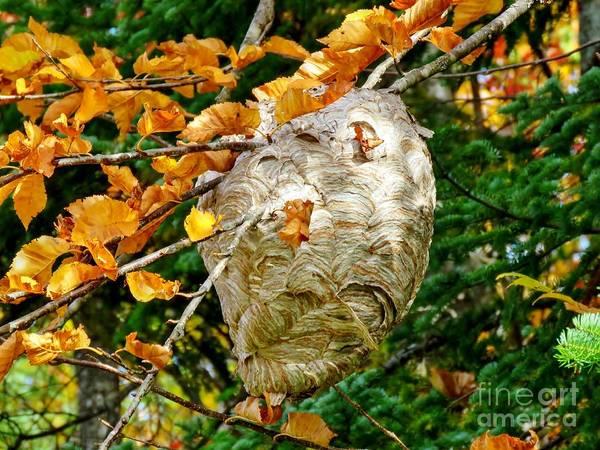 Madawaska Lake Photograph - Hornet's Nest by Vickie Ketch
