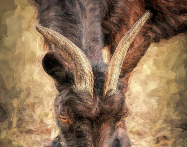 Photograph - Horns Authority by Pete Rems