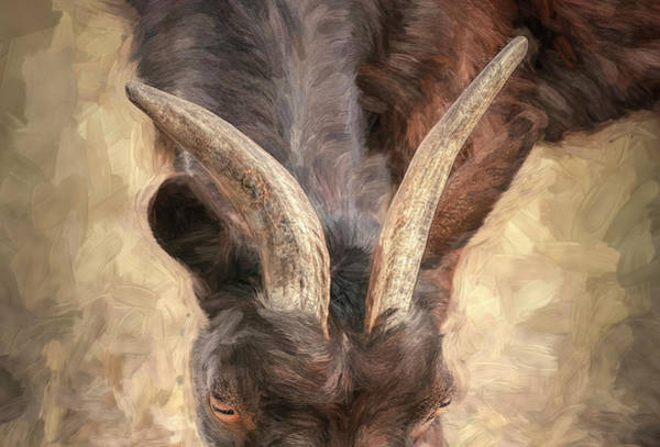Photograph - Horns by Pete Rems