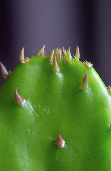 Photograph - Horny Cactus by Scott Lyons