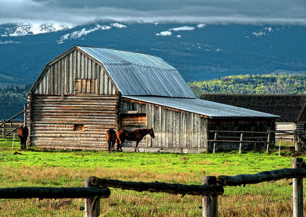 Wall Art - Photograph - Horse And Barn On Mormon Row, Grand by Bill Wight