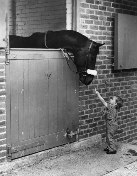 2 Photograph - Horse And Child by Evening Standard
