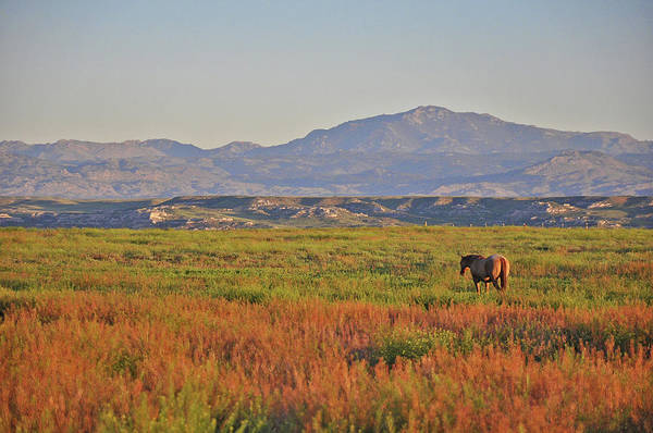 Photograph - Horse And Laramie Peak by Chance Kafka