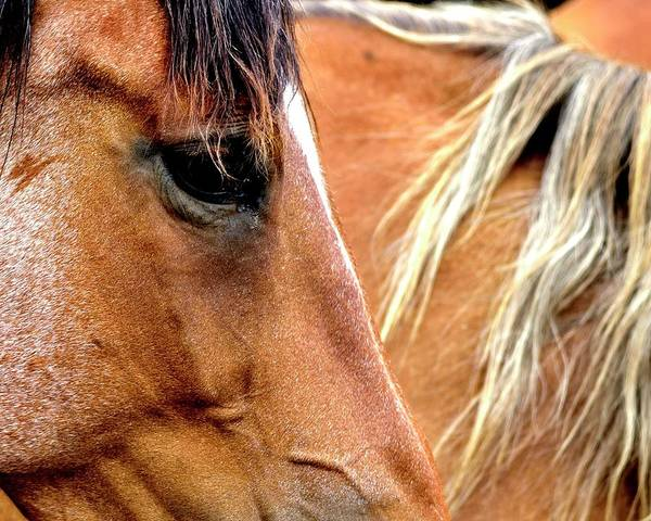 Photograph - Horse And Mane by Jerry Sodorff