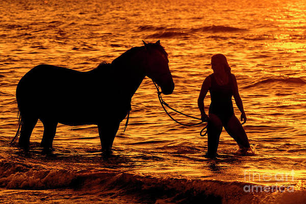 Photograph - Horse And Rider At Sunset by Arterra Picture Library