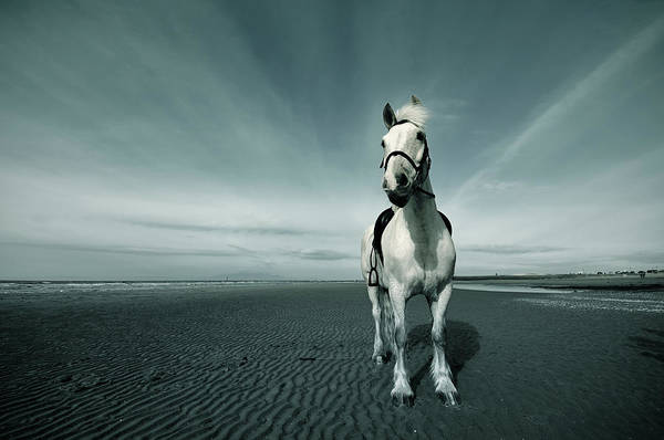 Wall Art - Photograph - Horse At Irvine Beach by Mikeimages