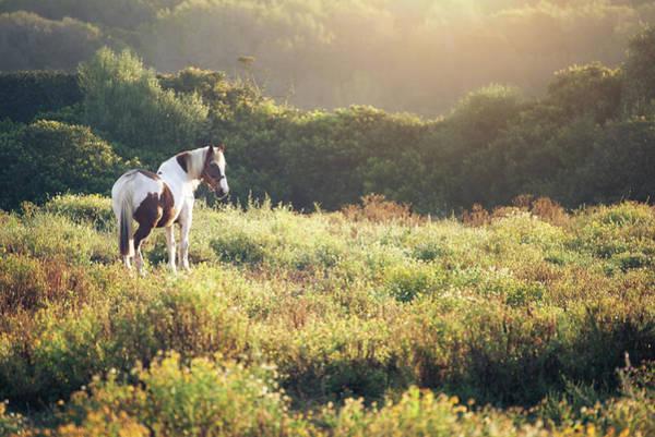 Wall Art - Photograph - Horse At Sunrise by Philipp Klinger