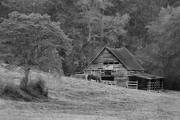 Wall Art - Photograph - Horse Barn by Lisa Bell