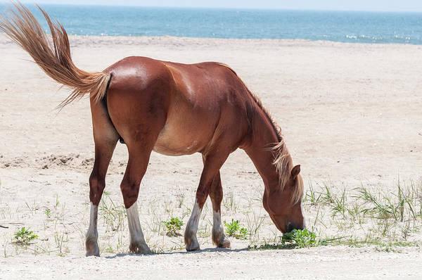 Photograph - Horse Beach by Dan Urban