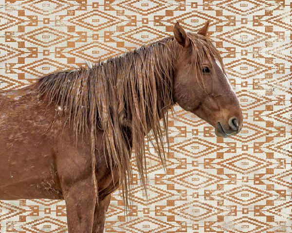Photograph - Horse Blanket by Mary Hone