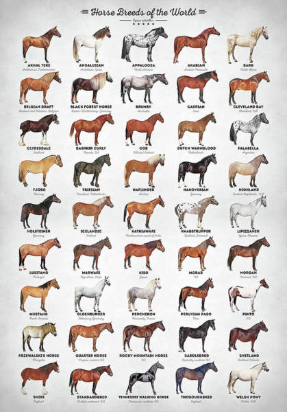 Wall Art - Digital Art - Horse Breeds Of The World by Zapista Zapista