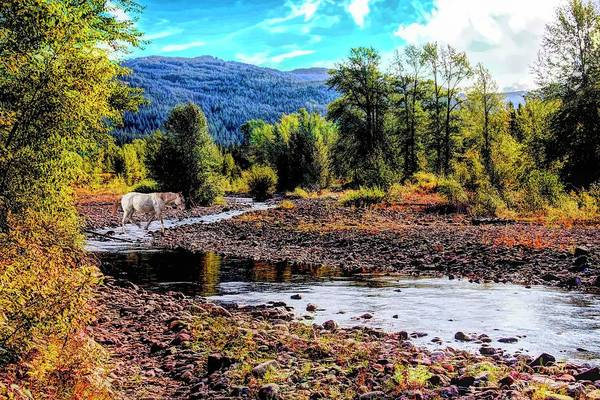 Digital Art - Horse Crossing Bear Creek,bear Creek Guest Ranch,essex Montana by Rusty R Smith