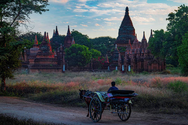 Photograph - Horse Drawn Cart In Myanmar At Sunrise by Chris Lord