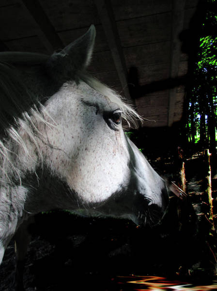 Wall Art - Mixed Media - Horse Expressions -  Sunlight Through The Trees On The Paso Fino Mare  by Patricia Keller