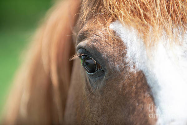 Photograph - Horse Eye - Farm Country by Dale Powell
