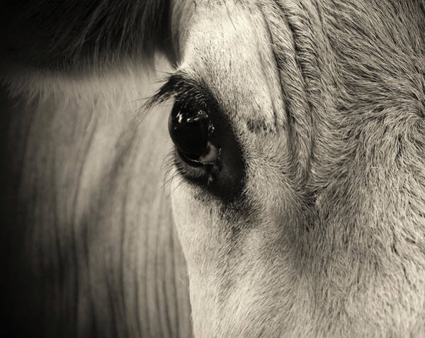 Curiosity Photograph - Horse Eye by Karena Goldfinch