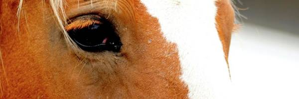 Photograph - Horse Eye Lashes by Jerry Sodorff