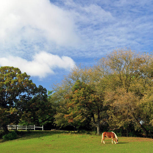 Wall Art - Photograph - Horse Farm In The Fall by Photography By Jessie Reeder