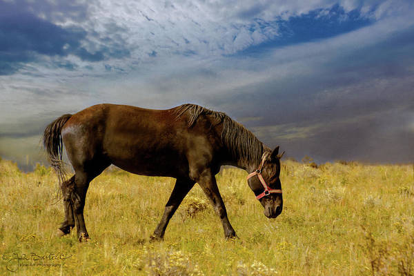 Westcliffe Photograph - Horse Grazing In The Pasture by John Bartelt