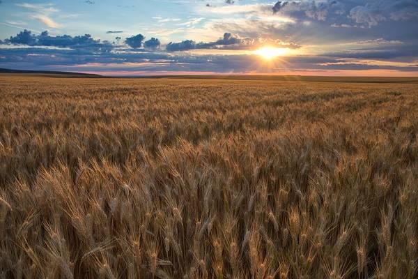 Wall Art - Photograph - Horse Heaven Wheat 2 by Lynn Hopwood