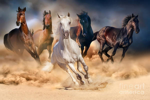 Runner Wall Art - Photograph - Horse Herd Run In Desert Sand Storm by Callipso