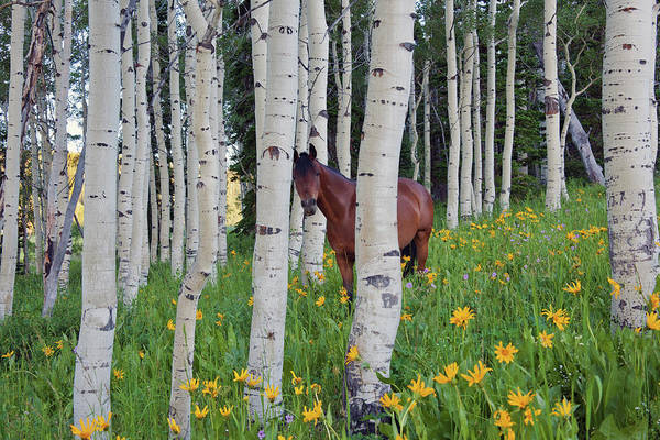 Uinta Photograph - Horse In A Field Of Wildflowers And by Mint Images - David Schultz