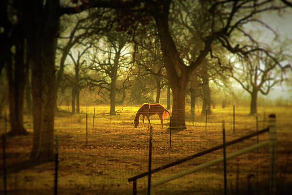 Wall Art - Photograph - Horse In Morning Sun Eating Grass by Photo By Jim Norris