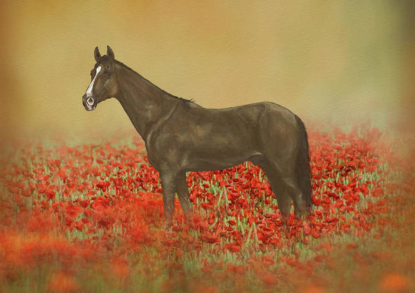 Wall Art - Mixed Media - Horse In Poppy Field by Amanda Lakey