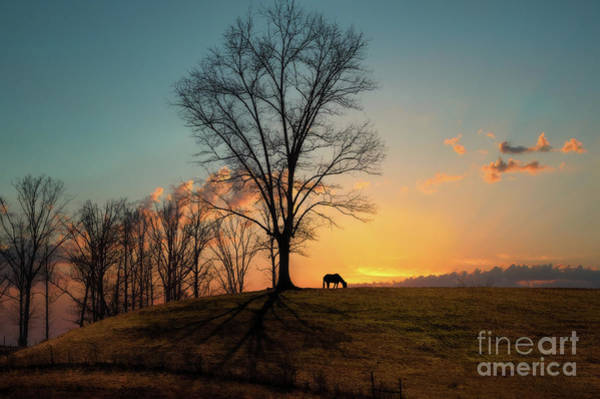 Wall Art - Photograph - Horse In Sunset by Lena Auxier