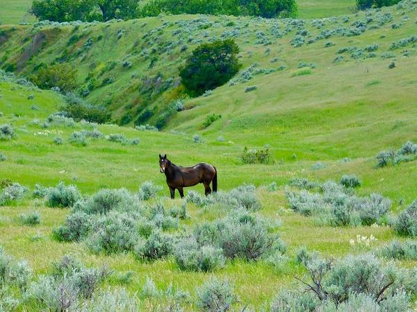 Photograph - Horse In The Little Bighorn Valley by Dan Miller