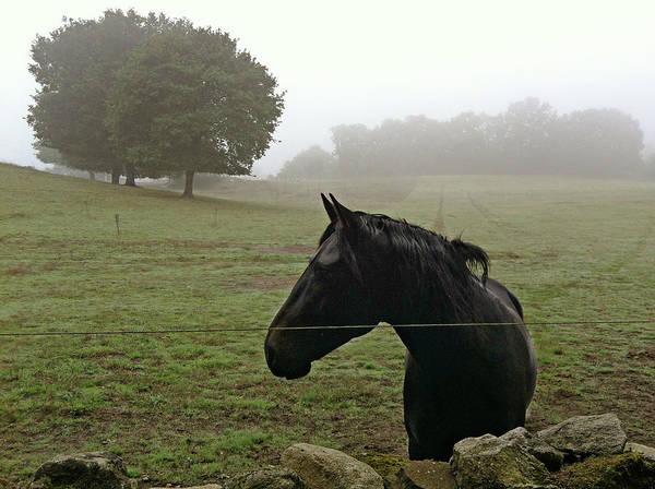 Wall Art - Photograph - Horse In The Mist by Salomé Fresco