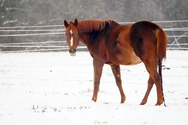 Wall Art - Photograph - Horse In Winter by Beth Collins