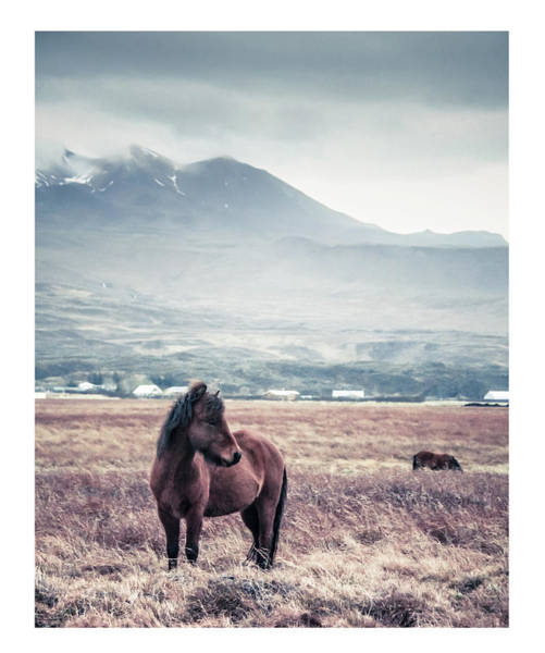 Art Prints Photograph - Horse by Lise Ulrich Fine Art Photography