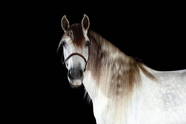 Riverside California Photograph - Horse by Monica Rodriguez