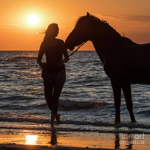 Photograph - Horse On The Beach by Arterra Picture Library