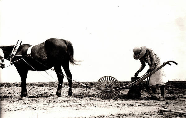 Photograph - Horse Plow II by John Jr Gholson