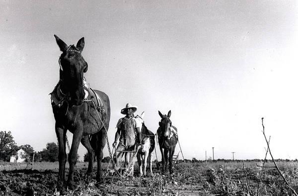 Photograph - Horse Plow by John Jr Gholson