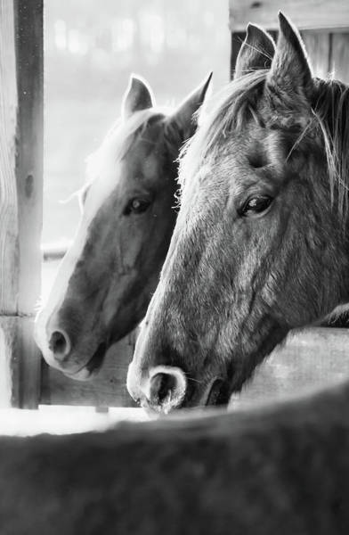 Photograph - Horse Portrait 3 by Andrea Anderegg