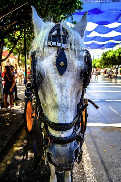 Photograph - Horse Portrait I by Borja Robles