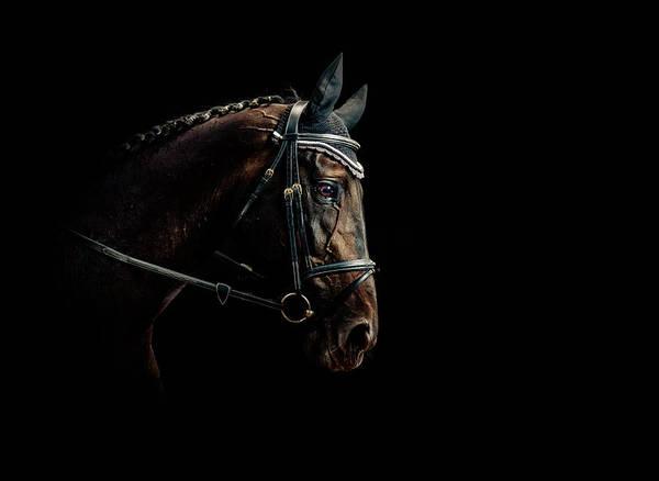 Photograph - Horse Portrait by Pixalot