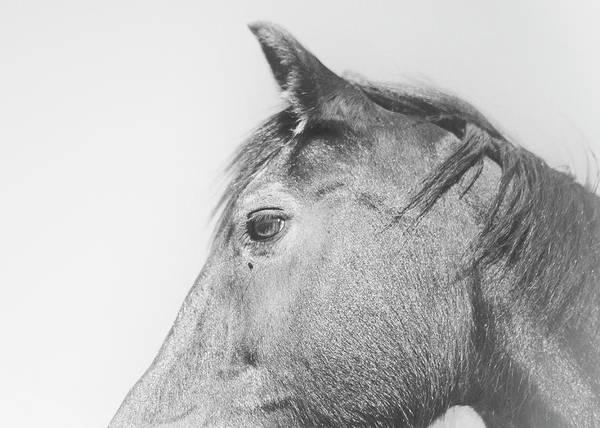 Wall Art - Photograph - Horse Profile by Stephanie McDowell